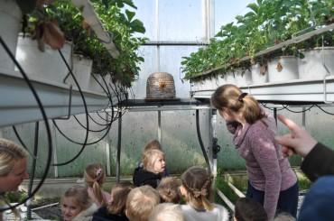 Instroomgroep – Naar de aardbeienkas